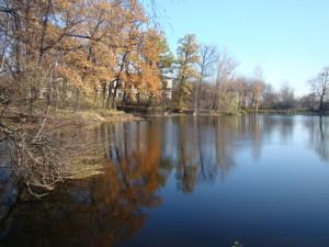 Рогожка пруд 2010