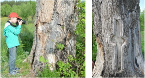 Рисунок 15. Фигуры, вырезанные на стволе дерева_resize