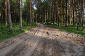 3) Проселочная дорога к бывшему песчаному карьер_resize