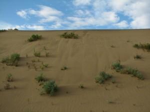 38. Чарские Пески, подвижные