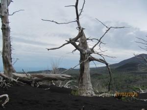 Фото 3 - Мёртвый лес IMG_6594