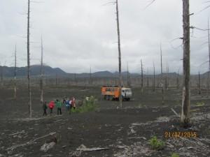 Фото 4 - Мёртвый лес - 2 IMG_6611
