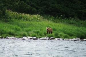 35. Молодой медведь