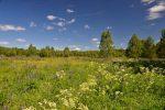 Поселок, которого нет, или «Метод цветущих садов» как способ для поиска вымерших поселений