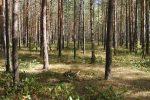 Об истории саровских лесных пожаров